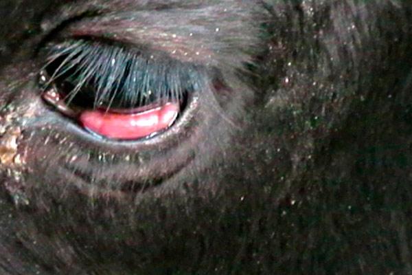 от животных заразиться нельзя