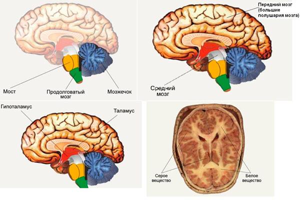 симптомы липомы мозга