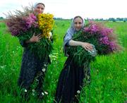 как лечиться травами