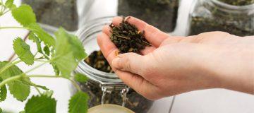 эффективное лечение миомы травами