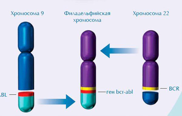 диагностика крови на лейкоз