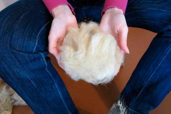 как помогает овечья шерсть