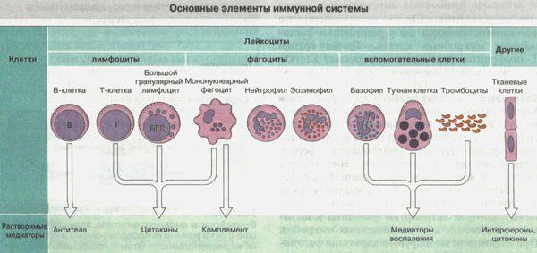 какие есть причины возникновения рака
