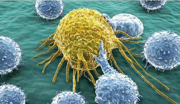 Т-лимфоциты ловят раковую клетку