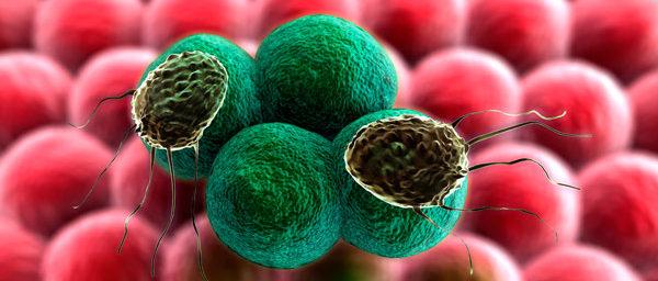 строение злокачественной частицы
