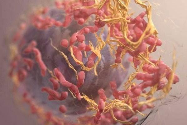 как выглядит меланома под микроскопом