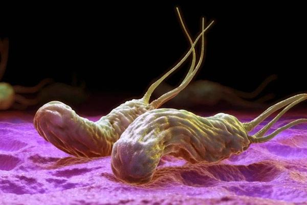 Хеликобактер пилори под микроскопом